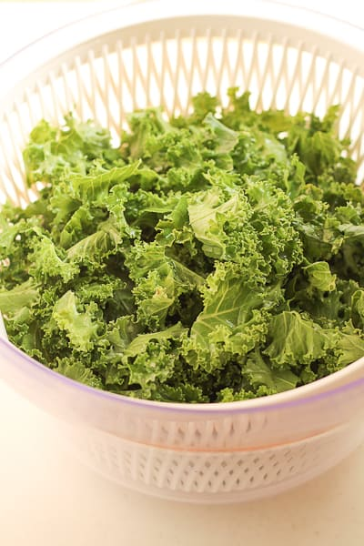 Freshly trimmed and washed curly green kale in a white salad spinner