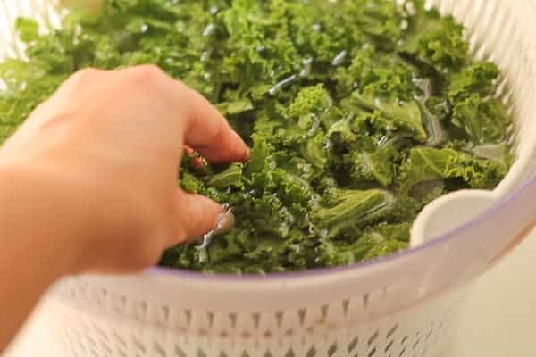 Green, curly kale in a salad spinner filled with water with a hand washing it